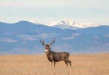 nc deer season